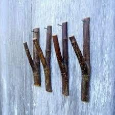 Diy Tree Coat Rack Professional Woodworkers Supplies Tree coat rack Coat racks and 77