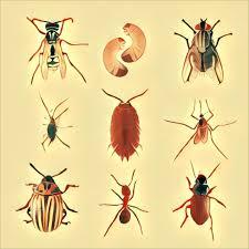 Insekten Traum Deutung
