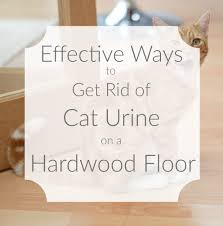 cleaning cat urine from wooden floors