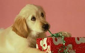 christmas puppies wallpaper. Fine Puppies Puppies Images Christmas Puppy HD Wallpaper And Background Photos For Wallpaper
