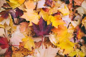"""Képtalálat a következőre: """"autumn"""""""