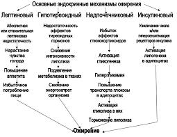 Реферат Ожирение com Банк рефератов сочинений  Ожирение