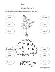 52ea93755c7a77be6eac9a2c8e3ea4ea worksheets for kindergarten plant parts 56 best images about plants on pinterest anchor charts on structure of flower worksheet