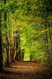 Forest Wallpapers: Free HD Download ...