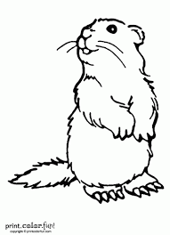 Small Picture Woodchuck coloring page Print Color Fun