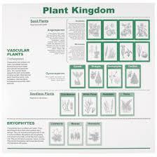 Plant Kingdom Classification Chart For Kids Plant Kingdom