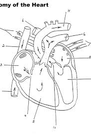 Small Picture Heart Coloring Pages Anatomy Apigramcom