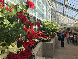 poinsettia display at the united states botanic garden