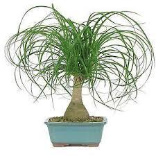 house plants. House Plants P
