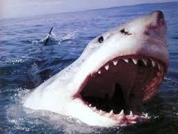 megalodon shark sightings 2015. Modren Megalodon Megalodon Shark Sightings  Photo12 For Shark Sightings 2015 H