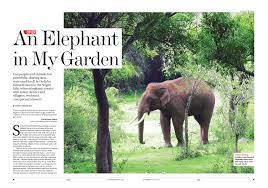 an elephant in my garden