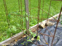 Diy tomato cage Decor Best Homemade Tomato Cages Gardenfork Best Homemade Tomato Cages Gf Video Gardenfork Eclectic Diy