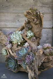 ... Best Succulent Planters Ideas Wall Driftwood Planter Hanging Ideas  Large Size ...