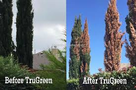 trugreen tree s and poor comany