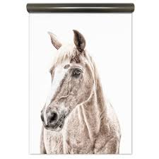 Magneetbehang Paard Van Groovy Magnets