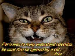 Funny Lazy Quotes Cute Cat Pictures With Sayings Litle Pups