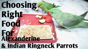 Parrot Diet Chart Diet Schedule Of Alexanderine Parrots Indian Ringneck Parrots What To Feed Parrots In Winter