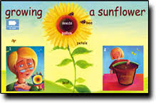 Sunflower Growing Chart Growing A Sunflower Chart Far Eastern Books Online