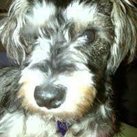 Lucy Mcdermott Facebook, Twitter & MySpace on PeekYou