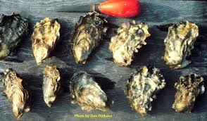 Oyster Identification Chart Bivalves In Puget Sound Encyclopedia Of Puget Sound