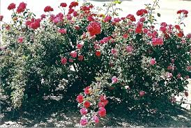how to keep dogs out of flower beds repellent why do dig in keeping from digging