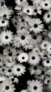 Black and White iPhone Wallpapers - Top ...