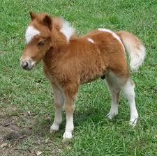 baby mini horse. Fine Horse With Baby Mini Horse N