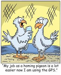 what dream about pigeon means