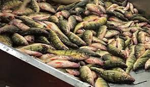 Taylor Fish Company de Wheatley Carte