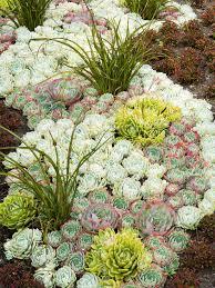 Succulent Garden Designs Unique Designing A Garden With Foliage Gardening My Little Piece Of