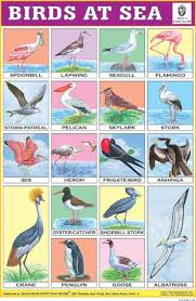 Hindi Birds Name Chart Birds At Sea English Study School Kit Learn Hindi