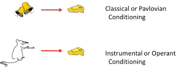 Example Of Classical Conditioning Conditioning And Learning Noba