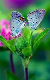 Butterfly Flower Hintergrundbilder ...