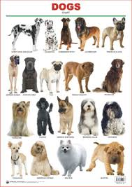 dog chart educational charts series dogs
