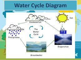o    neill  molly the water cycle