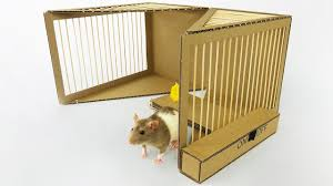 DIY Simple Rat Trap from Cardboard. The Q
