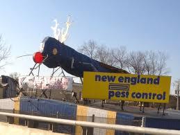 Big Blue Bug Solutions 10 Things Only Rhode Islanders Get 2 Universityprimetime