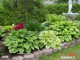 Small Picture hosta gardening Hostas in a garden design Hosta Forum