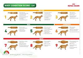 Body Condition Cat Weight Chart Cat Body Pet Gear