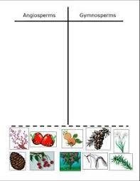 Angiosperm Vs Gymnosperm Venn Diagram 28 Best Botany For Kids Images Plants Preschool Science Activities