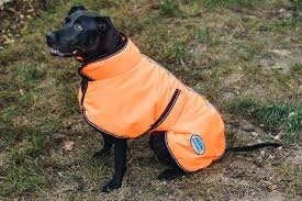 the best winter jackets and raincoats for dogs reviews by wirecutter a new york times company