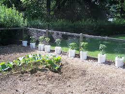 vegetable garden fence ideas photo 12
