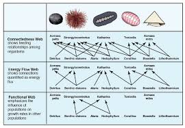 Create Flow Charts That Show Four Different Food Chains Food Web Concept And Applications Learn Science At Scitable