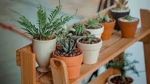 Pflanzen Im Schlafzimmer Das Sollten Sie Wissen Chip