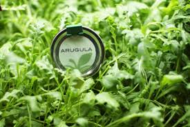 arugula is leafy vegetable and it s very tasty