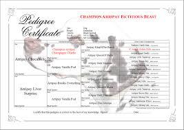 Dog Genealogy Chart Cat And Dog Pedigree Breeding Software For Windows And Mac