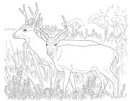 Small Picture Coloring Pages Animals Coloring Pages Of Deer Image Deer