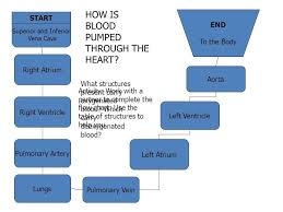 Flowchart To Explain The Process Of Circulation Of Blood