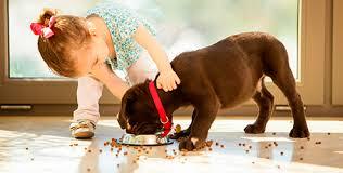 Resultado de imagem para Adotar um animal faz bem ao corpo e à alma