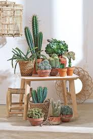 Accessories: Wall Rack Plants Desert Display - Indoor Desert Plants